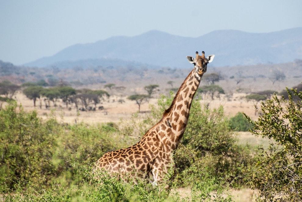 Africká safari